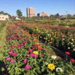 CCSO Flower Garden